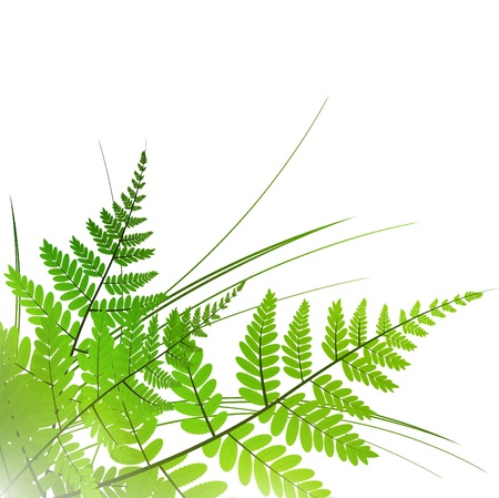 ferns: fern with grass over white background, copyspace