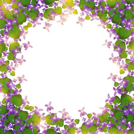 fiori di campo: confine di viola selvaggia su sfondo bianco Vettoriali