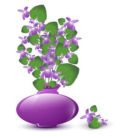 bouquet de violette sauvage dans un vase sur fond blanc