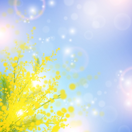 mimosa: Mimosa flowers over blue sky and magic spring lights