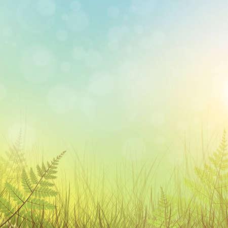 fern: green grass meadow background