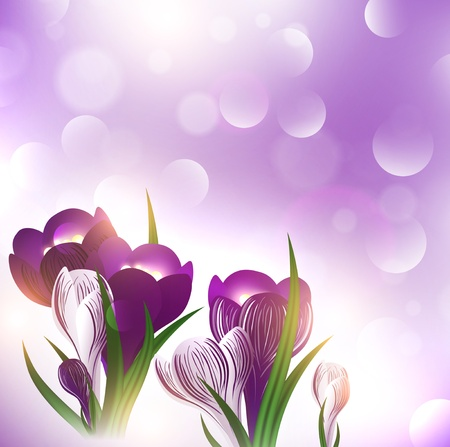 crocus: illustration of the crocus flower over bright holiday background Illustration