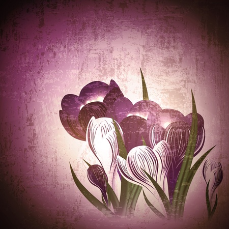 Vintage grunge floral background with wild crocus flower Vector