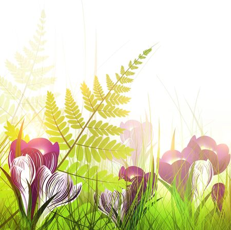 spring meadow with crocus flowers over white background Stock Vector - 12837594