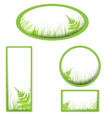 fern: banners with grass and fern over white