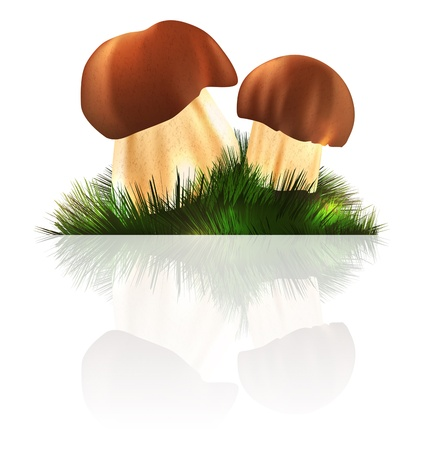 boletus: Boletus edulis mushrooms with grass over white background