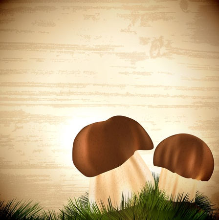 Boletus edulis mushrooms with grass over wooden background Vector
