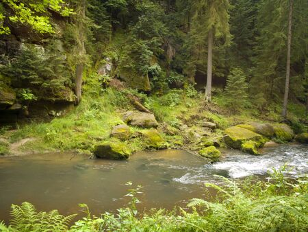 River in the wild green forest Stock Photo - 15477055