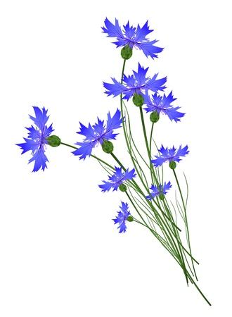 Cornflower: Blue Cornflower Bouquet Over White Background