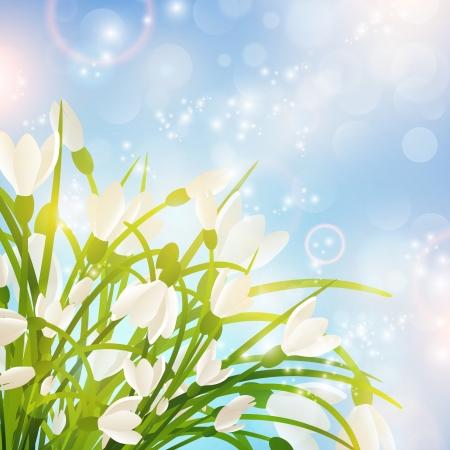snowdrop: Spring Snowdrop Flowers Over Bright Sunny Background