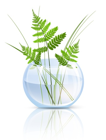 Green Grass and Fern In Round Glass Vase Over White Background
