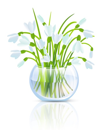Illustration of Snowdrop Flowers in Grass Vase Over White Background Stock Vector - 17695889