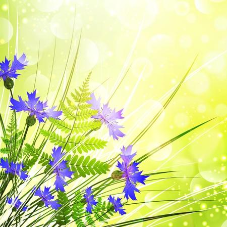 Cornflower: Cornflower Bouquet With Fern Over Sunny Bright Background Illustration