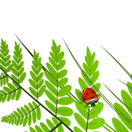 fern leaf: Fern Leaf and Ladybug Over White Background, Copy space Illustration