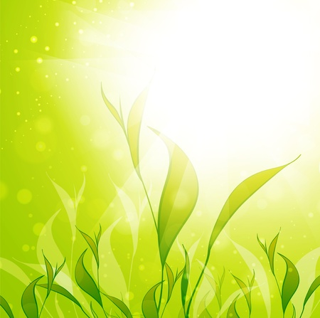 Tea Plantation Leaves Over Green Sunny Background, Copyspace Vector