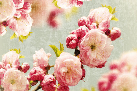 floral grunge: Abstract Vintage Pink Small Roses Background