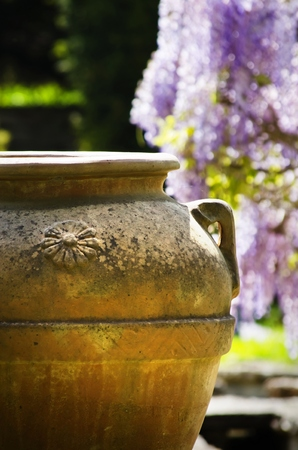 antique vase: Antique Clay Vase Over Spring Wistaria Flower Blossom Stock Photo