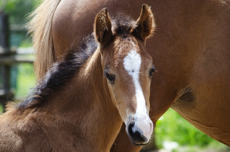 Photo of Charming Brown Horse  Foal