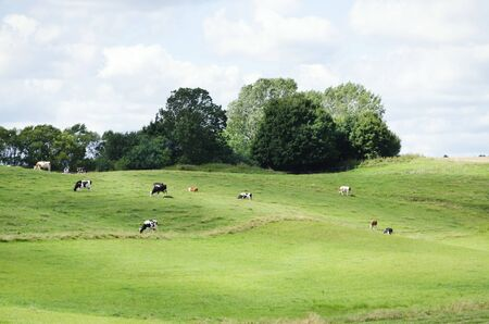 grazing land: Farm Green Meadow With Different Cows
