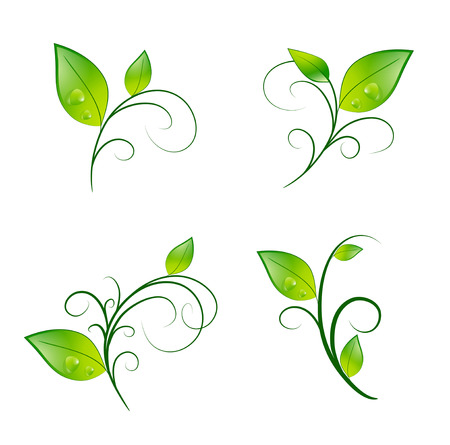 vitality: Green Vitality Leaf Floral Decoration Eco Set