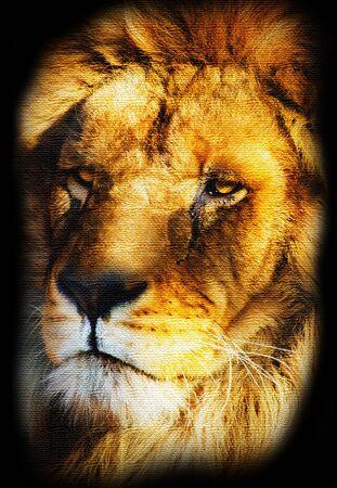 majestic: Illustration of Golden Lion Portrait Canvas Stylized Stock Photo