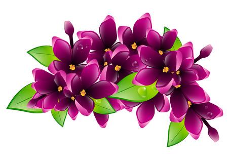 wet leaf: Illustration of Spring Wet Lilac Flower Branch