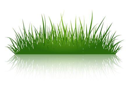 over white background: Green Grass Illustration Over White Background
