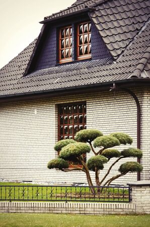evergreen tree: House Outdoor Yard With Little Evergreen Tree