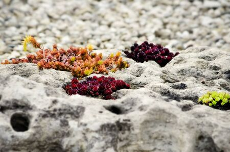 autumn garden: Autumn Stone Gardening With Different Color Plants