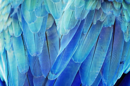 Photo of the Bird Turquoise Feather Background