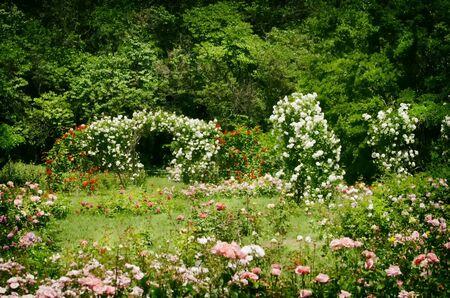 Foto di Nizza Rose Spring Garden