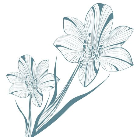 One colored Abstract Vintage Lily Flower Illustration