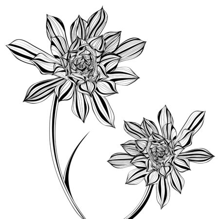 exotic flowers: Floral Illustration of Aeonium Tree Flower in Black and White