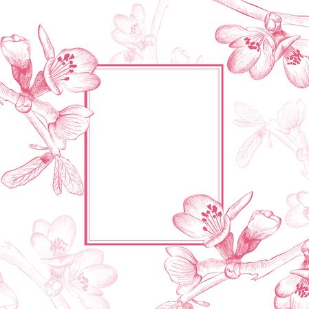 fleur de cerisier: Border Vintage Cherry Blossom Spring Flower sur fond blanc