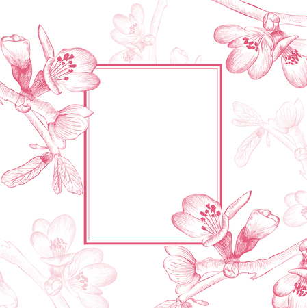 borders plants: Vintage Border of Spring Cherry Blossom Flower Over White Background Illustration