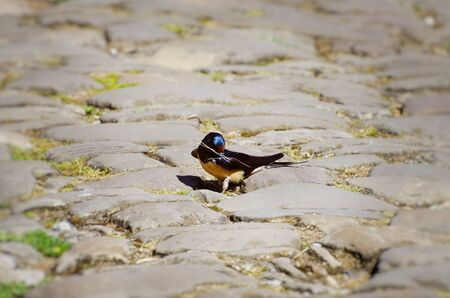 stone road: Little Swallow at Stone Road Stock Photo