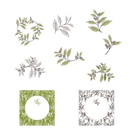 yerba mate: Mate de hoja de té y la colección del diseño de la planta