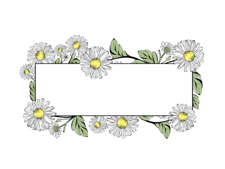 Frontera de la flor de la margarita con Copyspace Sobre Blanco