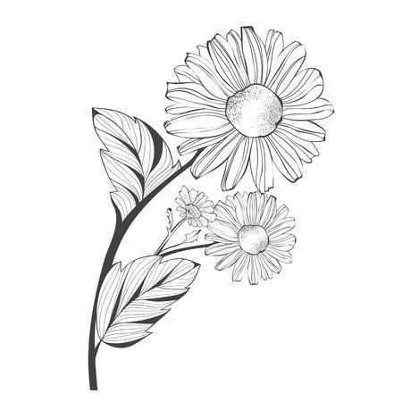 single flower: Branch of Single Daisy Flower Over White Background