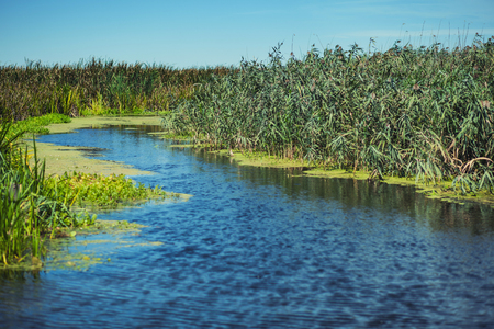 wandering: Wandering river between green plants Stock Photo