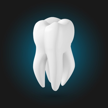 Illustration of Tooth. Realistic 3D Teeth Template