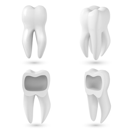 Illustration of Vector Realistic 3D Tooth Set. Healthy Teeth Set Care Vector Product Template Isolated on White Background Ilustração