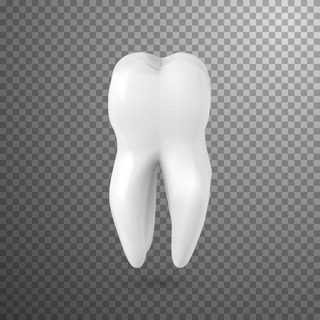 Illustration of Tooth Icon. Realistic Teeth Isolated on Transparent Overlay Background