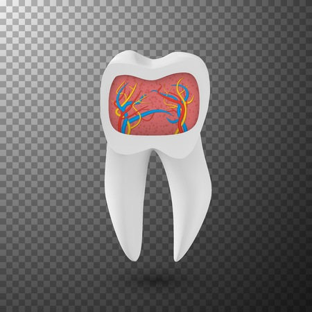 3D Teeth with Inner Part Veins Template Isolated on Transparent Overlay Background