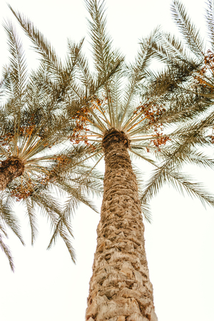 Bottom view on exotic palm and blue sky. Beautiful exotic nature. Nobody on picture. Holidays, tourism on the sea