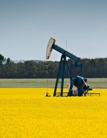 Pumpjack in blooming Canola field Stock Photo - 9207238