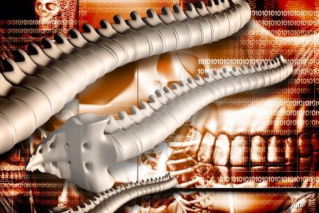 Digital illustration of spine in colour background Stock Illustration - 6893735