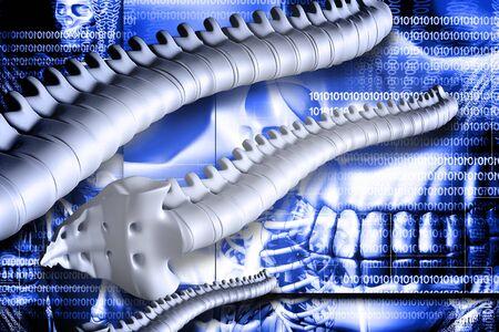 Digital illustration of spine in colour background Stock Illustration - 6893747