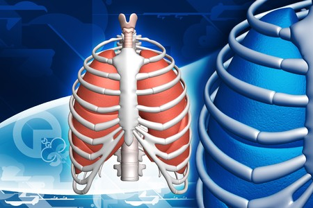 rib: human lungs and rib in color background  Stock Photo
