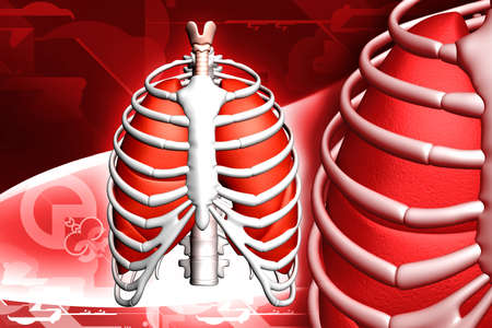 i polmoni umani e rib sfondo di colore Archivio Fotografico - 6893657